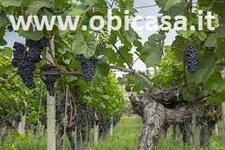 terreno agricolo Brisighella (RA)